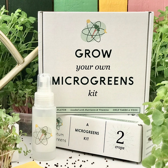 Grow Your Own Microgreens Kit from QuantumMicrogreens | Celebrate with 8 National Salad Month | Bottom Left of the Mitten